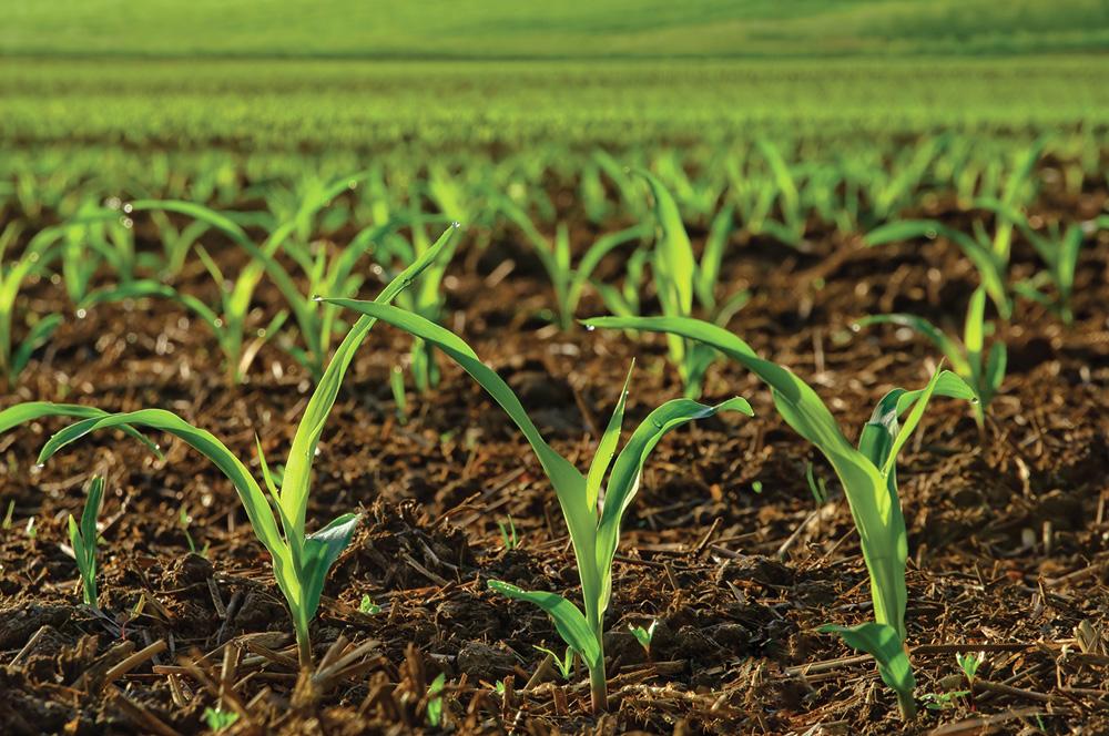 La crescita continua dei prodotti biologici sui mercati. di F. Triggiani