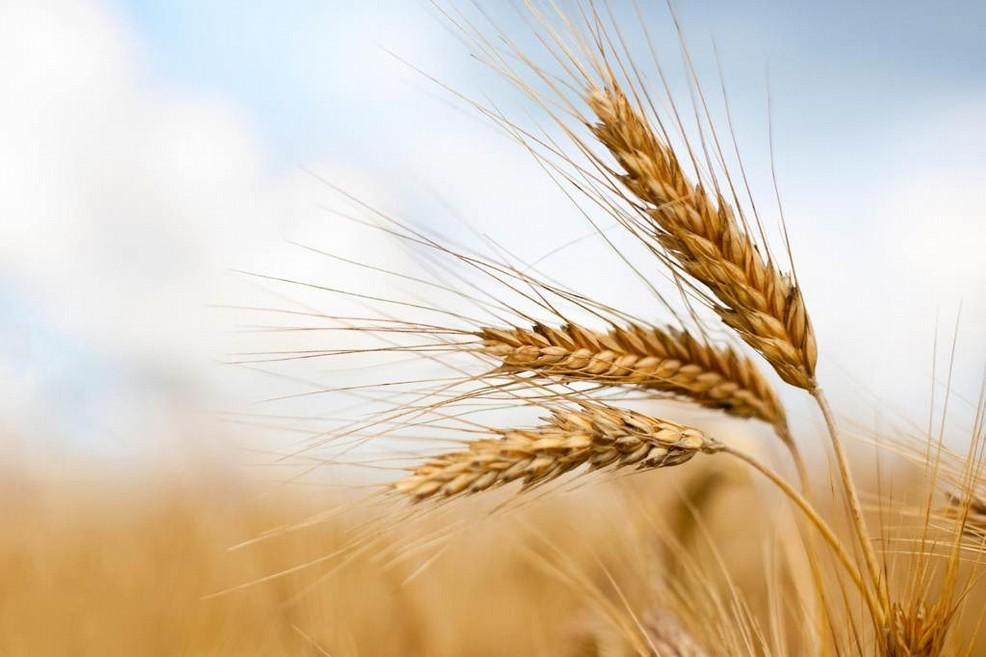 Agricoltura sociale e mercato di A. Casieri