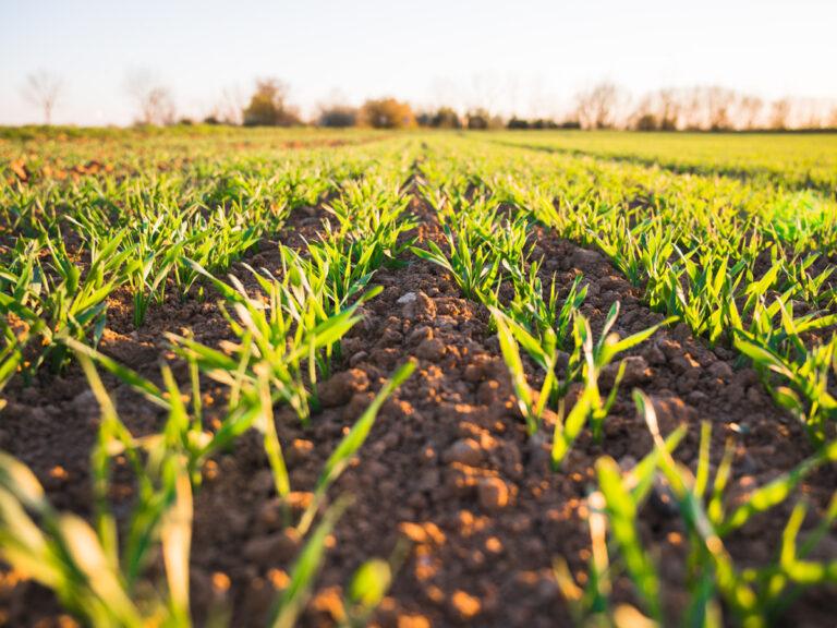 Gestione della fertilità del suolo mediante inerbimento e fertirrigazione in continuo. di M. Spagnuolo